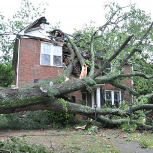 Fallen Tree Damage